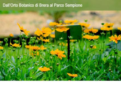 Aster per le famiglie: Dall'Orto Botanico di Brera al Parco Sempione
