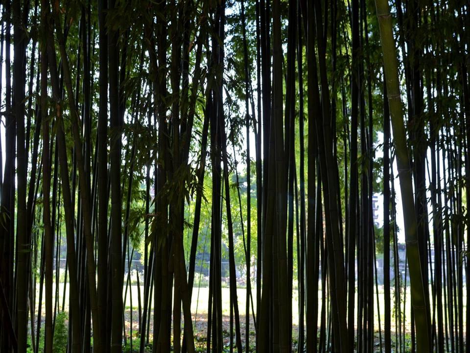 Perdiamoci in un bosco di bambù… a Milano!